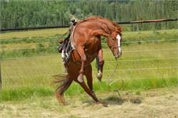 Horse Health Home